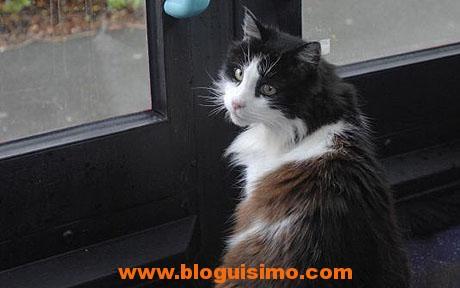 ANIMALS Cat 122355