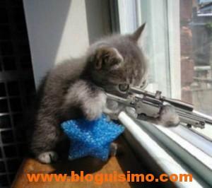 gato francotirador