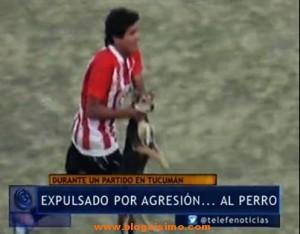agresion a perro futbolista
