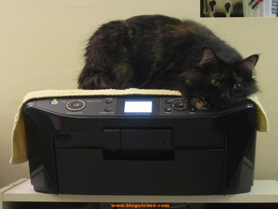 cat printer