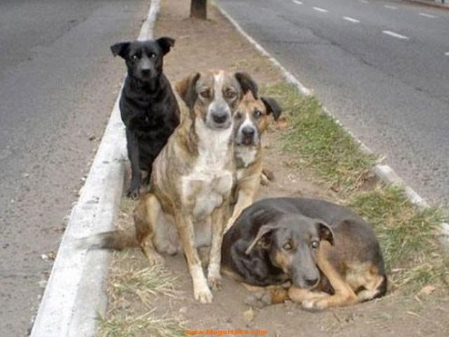 perros-callejeros-evitan-hombre-viole-nina-argentina