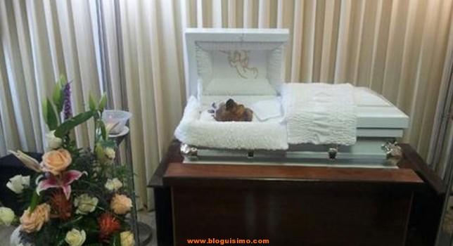brownie muerto