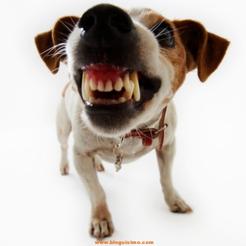 perro-agresivo1