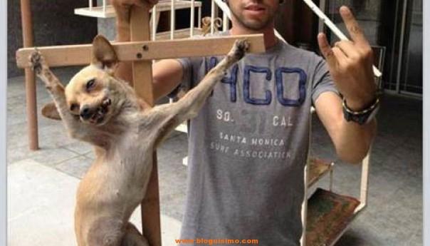 perro crucificado