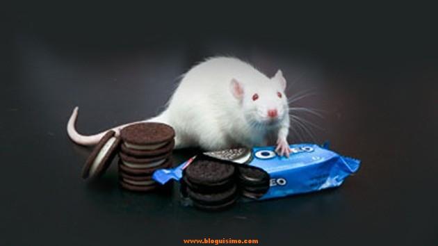 oreo ratones cocaina