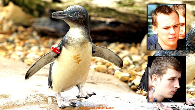 dirk el pinguino