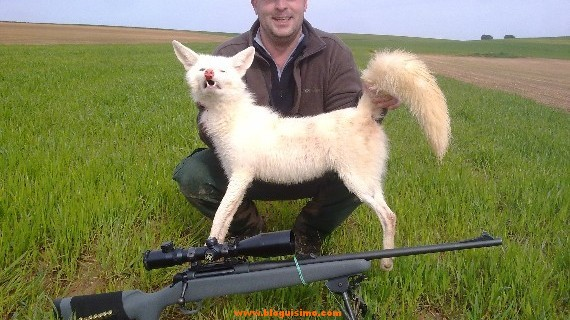 zorro albio asesinado