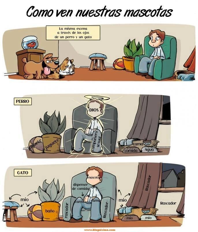 como nos ven nuestras mascotas