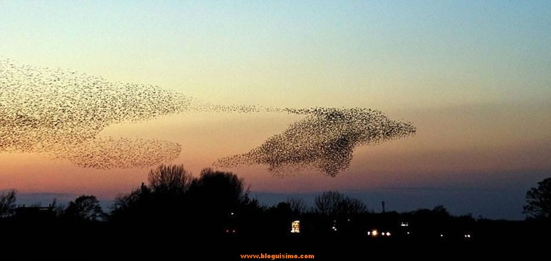 dolphin-bird-murmuration-perfect-timing