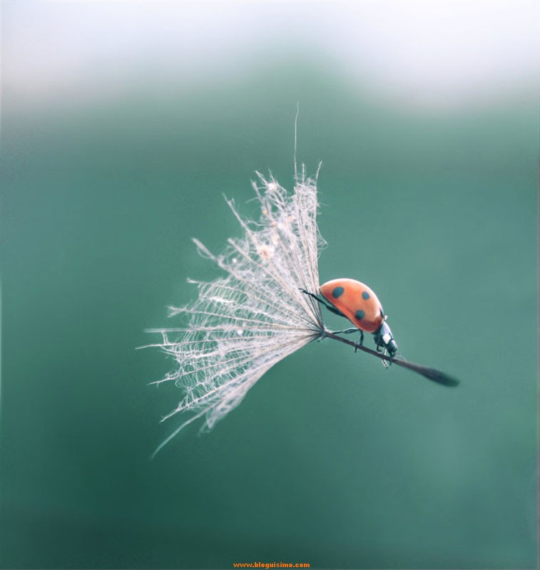ladybug-dandelion-perfect-timing