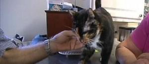 La reacción del gato en el hogar familiar de los heridos fue brutal, según su propio relato a News10./News10