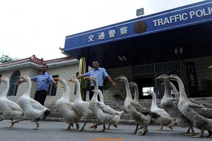 china y sus cosas 10