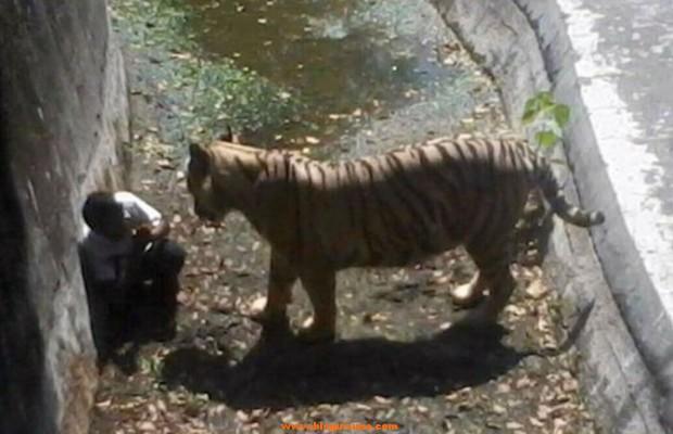 niño atacado por tigre en zoo de la india