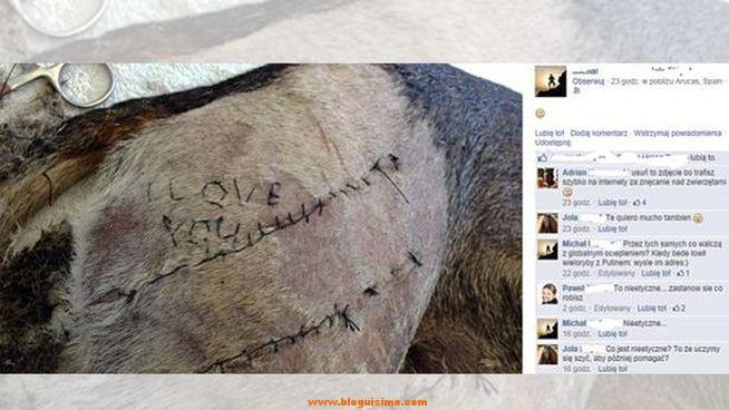 estudiante-veterinario-escribe-coser-perro