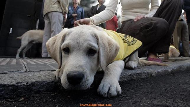 Una invidente debe pagar 28.000 euros a la mujer que tropezó con su perro-guía