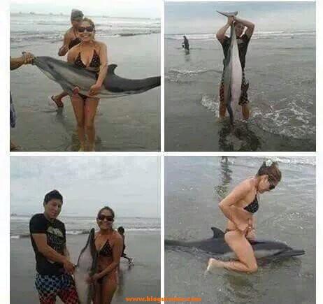 Delfín muere a manos de unos turistas